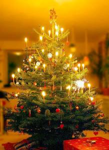 christmas tree.jAmy.3